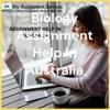 Assignment Help In Australia artwork