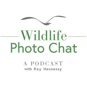 Wildlife Photo Chat