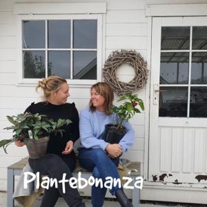 Plantebonanza