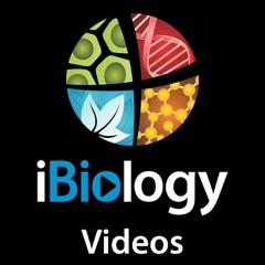 iBiology Videos