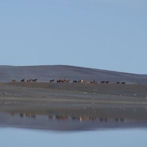 Islandshästpodden