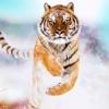 Tiger Resilience  artwork