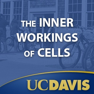 The Inner Workings of Cells, Winter 2008