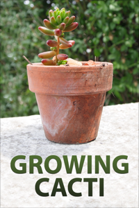 Growing Cacti Book Review