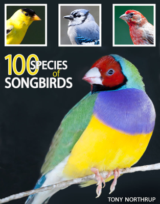 100 Species of Songbirds: A Picture Book for Bird Watchers and Lovers - Tony Northrup book