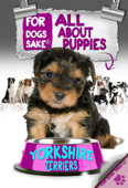 All About Yorkshire Terrier Puppies