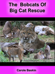 The Bobcats of Big Cat Rescue