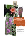 Local Plant Identification And Activities