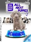 All About Weimaraner Puppies