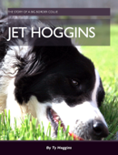 Jet the Border Collie