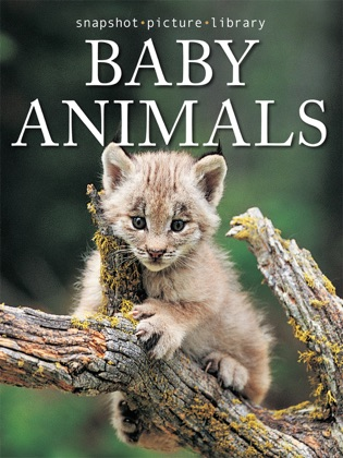 Baby Animals book cover