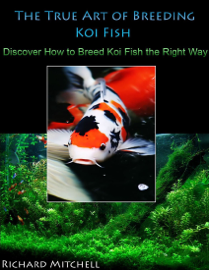 The True Art of Breeding Koi Fish