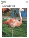BeginningReads 6-2 Animal Feet