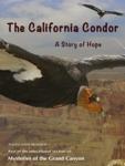 The California Condor, a Story of Hope