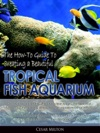 The How-To Guide To Creating A Beautiful Tropical Fish Aquarium