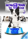 How To Train Your Border Colliie