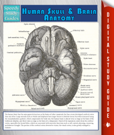 Human Skull And Brain Anatomy (Speedy Study Guide) book