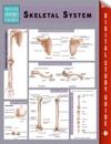 Skeletal System Speedy Study Guides