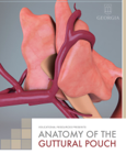 Anatomy of the Guttural Pouch