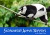 Endangered Animal Reports