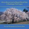 Cherry Blossom Land At Branch Brook Park