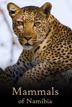 Mammals Of Namibia