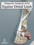 Diagnostic Analgesia of the Equine Distal Limb