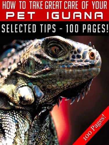 How To Take Great Care Of Your Pet Iguana