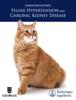 Educational Resources, University of Georgia - Feline Hypertension and Chronic Kidney Disease artwork
