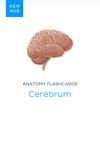 Anatomy flashcards: Cerebrum