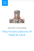 Anatomy flashcards: Neurovasculature of head & neck
