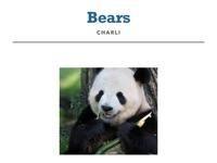 Bears Information Report