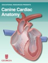 Canine Cardiac Anatomy