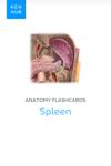 Anatomy flashcards: Spleen