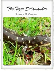 The Tiger Salamander