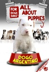 All About Dogo Argentino Puppies