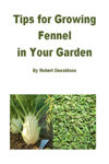 Tips for Growing Fennel in Your Garden