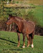 Begegnungen mit schönen Pferden