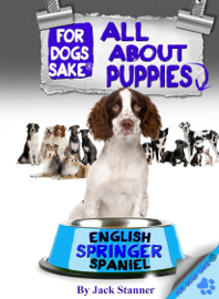 All About English Springer Spaniel Puppies