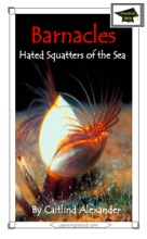 Barnacles: Hated Squatters Of The Sea: Educational