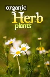 Organic Herb Plant