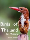 Birds Of Thailand For Visitors