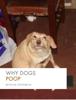 Mitch Webb & Steven Williams - Why Dogs Poop kunstwerk