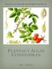 Luis GuLo - Manual de plantas y algas comestibles ilustración