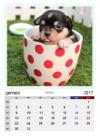 Calendario Amici A 4 Zampe 2017