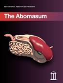 The Abomasum