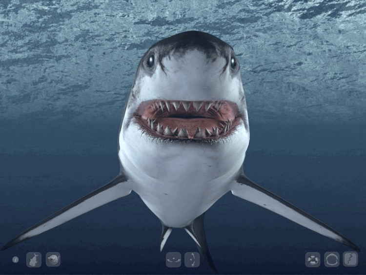 Talking Great White HD - for iPad screenshot-2