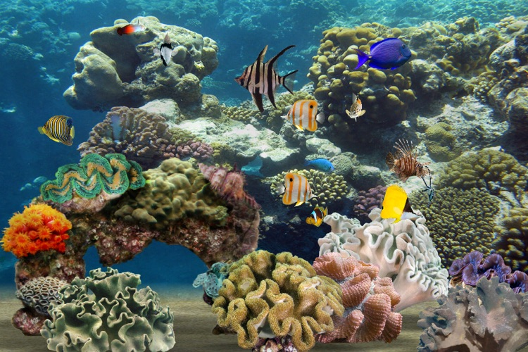 MyReef 3D Aquarium screenshot-0