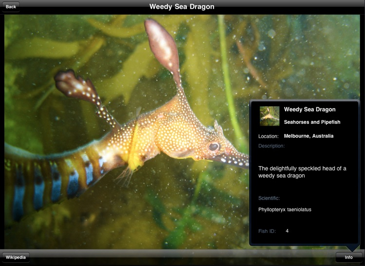 Reef Fish Book screenshot-0