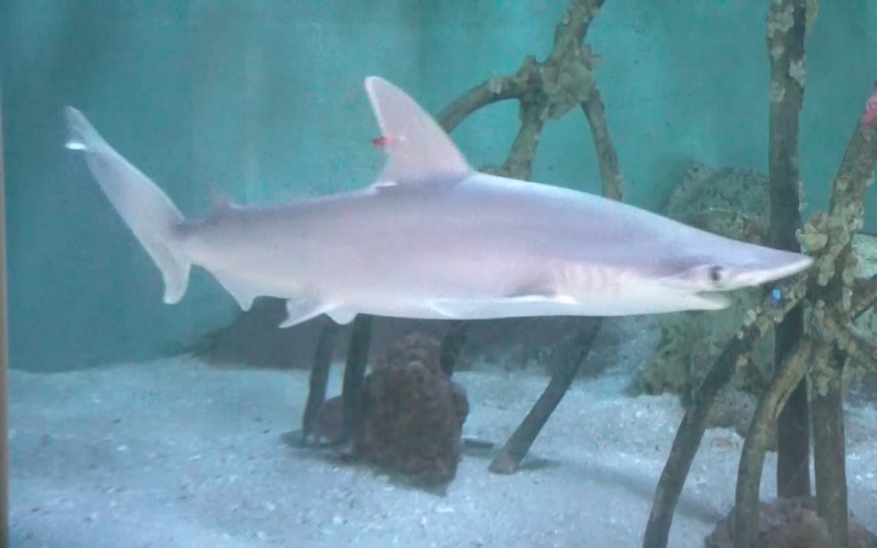 Reef Aquarium HD Screenshot
